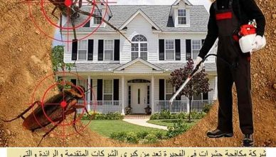 شركة مكافحة حشرات الفجيرة