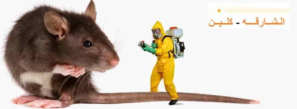مكافحة الفئران فى الشارقة